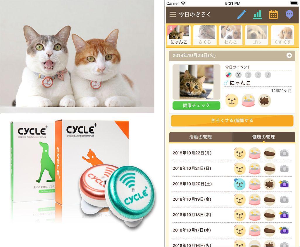 ネコがPlus Cycleを装着した様子