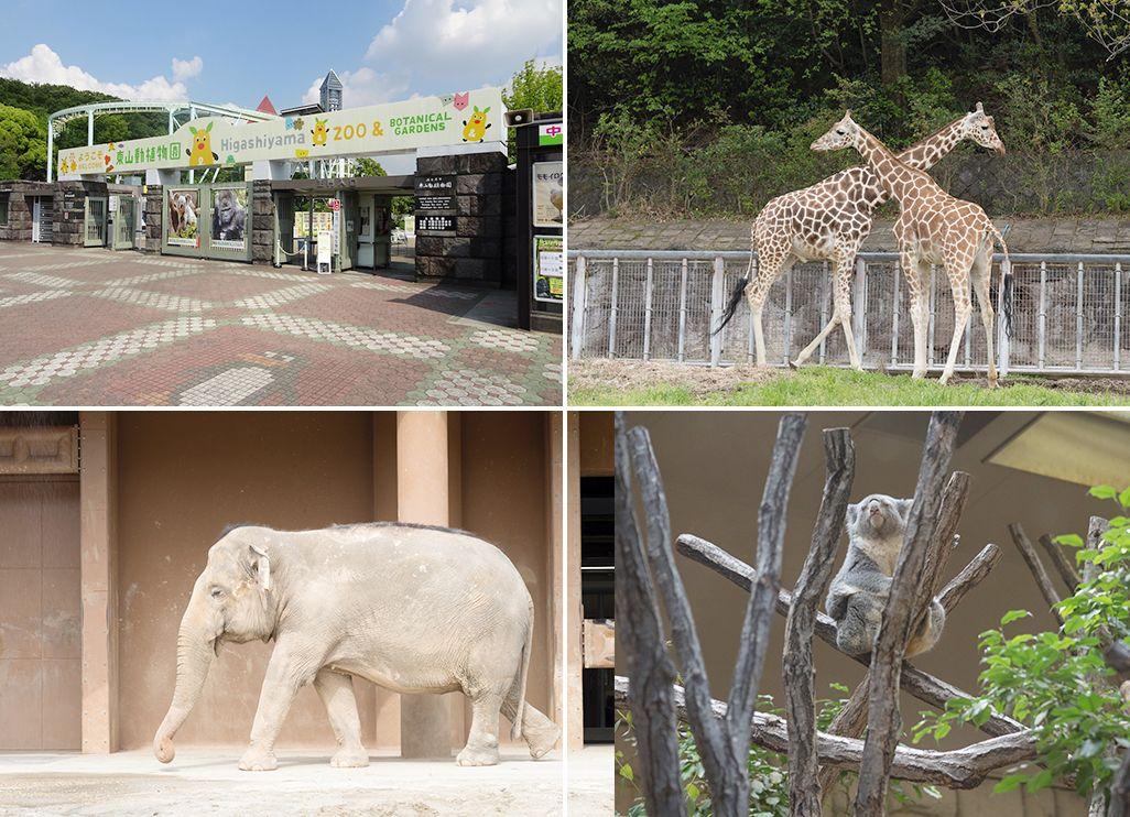 東山動植物園の動物たち