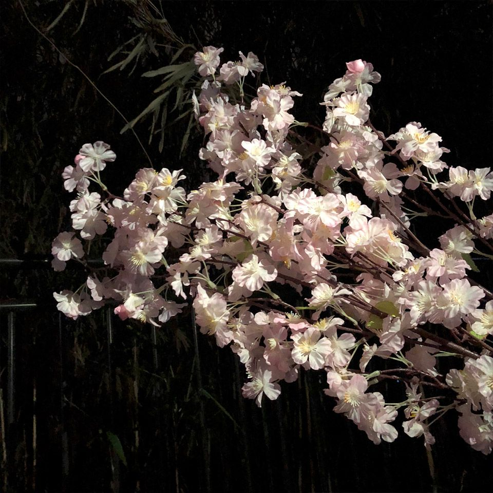 市ヶ谷の夜桜をiPhone2台使ってライトアップして撮影をする