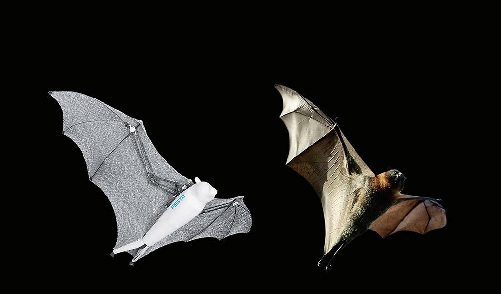 左:「BionicFlyingFox」右:本物のコウモリ