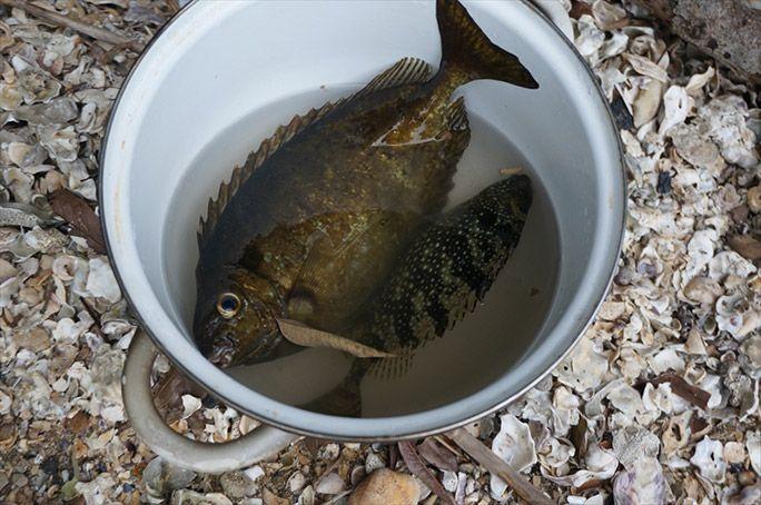 釣りあげた魚