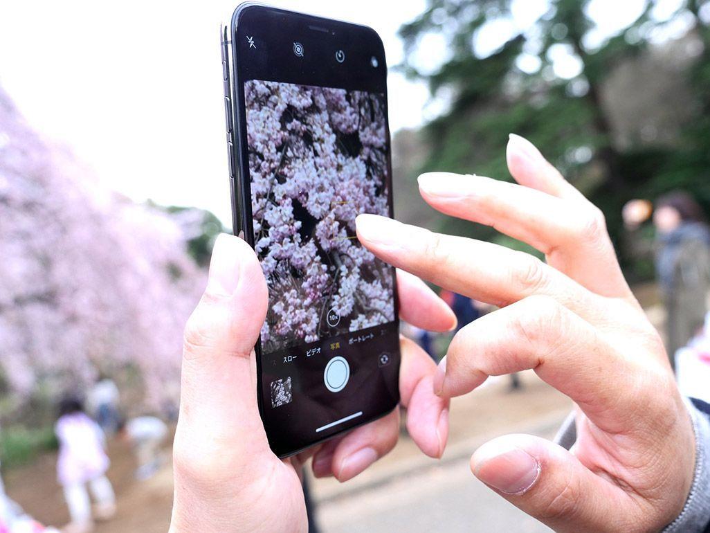 花見 iPhoneで撮影