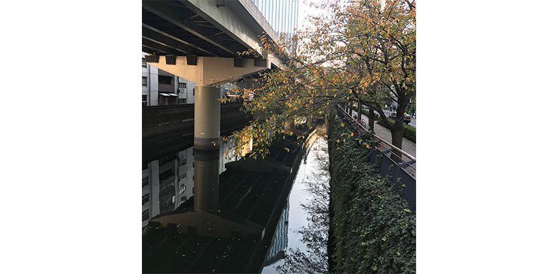 川の上を走る高速道路と紅葉