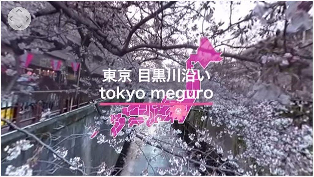 ウェザーニュースのお花見VR