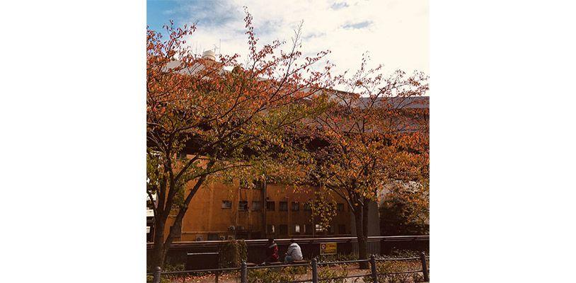 紅葉と建物と青空