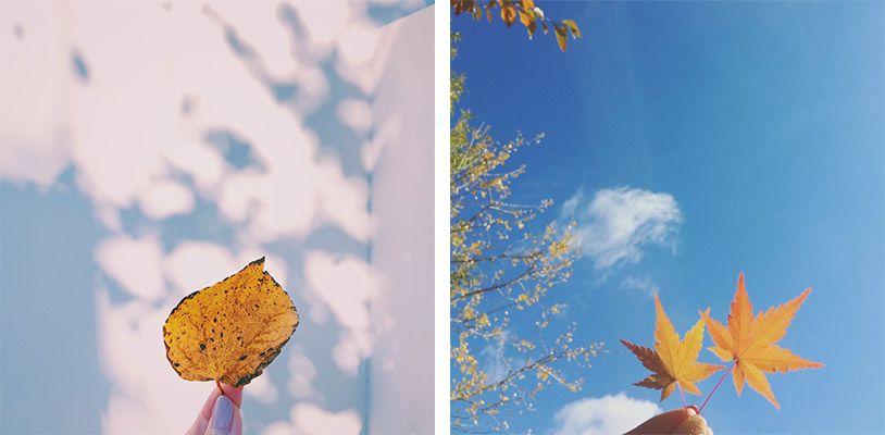手で持った紅葉の葉っぱを壁や空にかざして撮影