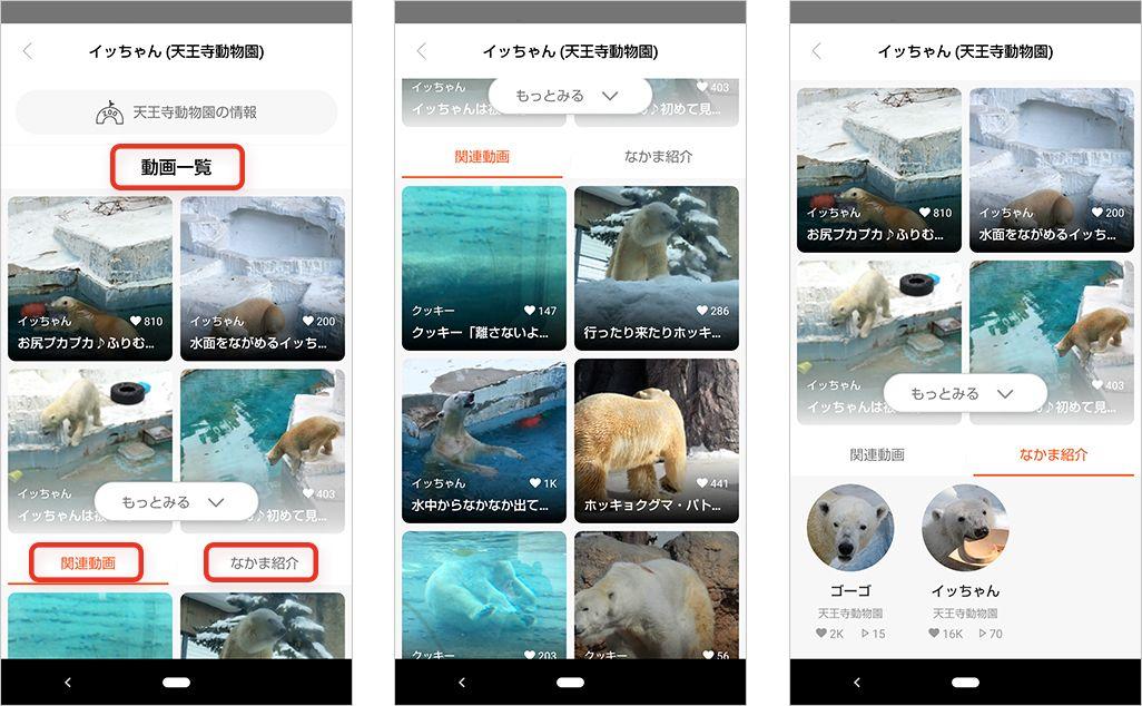 ともだち」登録した動物を起点に、同じ種の動物の動画や情報を見ることもできる