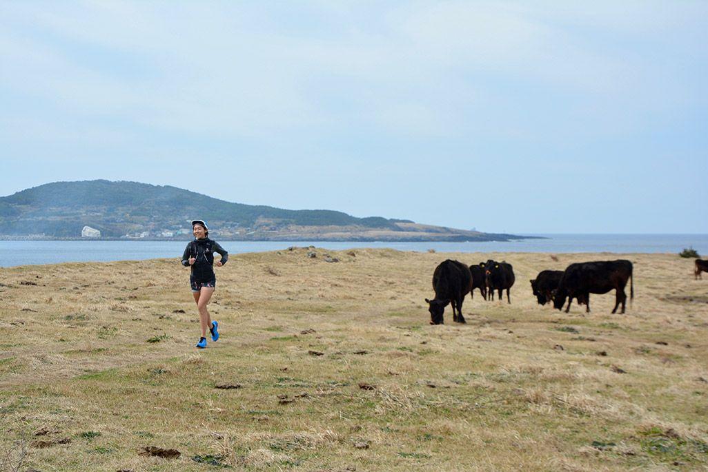 小値賀島の長崎鼻を走る浦谷美帆さんと草を食む牛