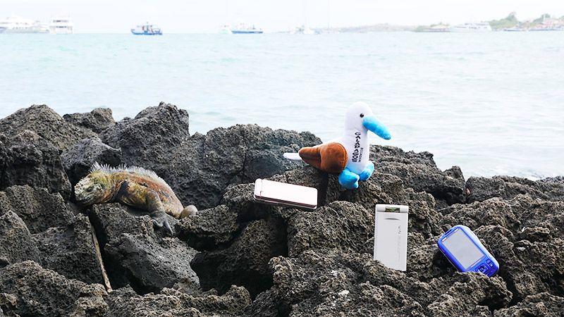 岩礁の上のイグアナとガラケーとぬいぐるみ
