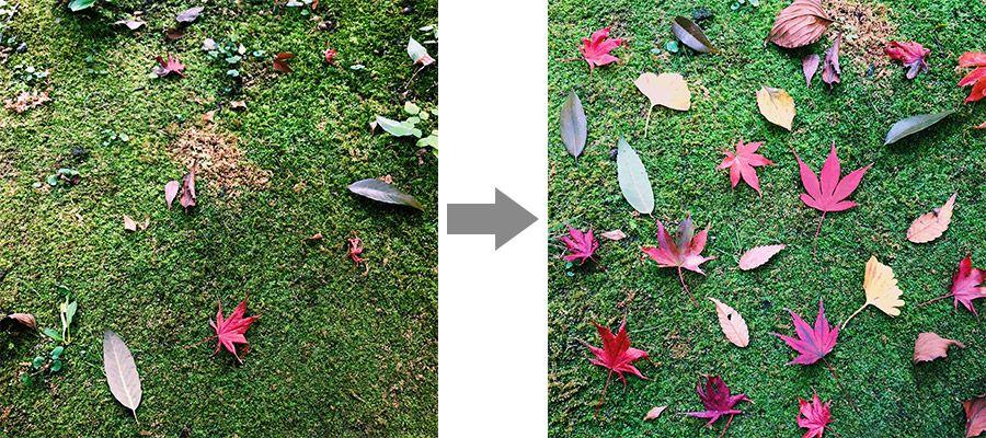 地面の上の落ち葉