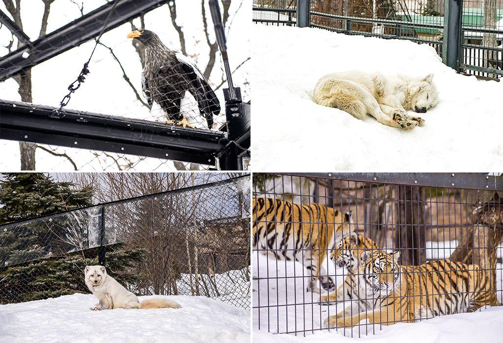 旭山動物園で暮らす動物たち