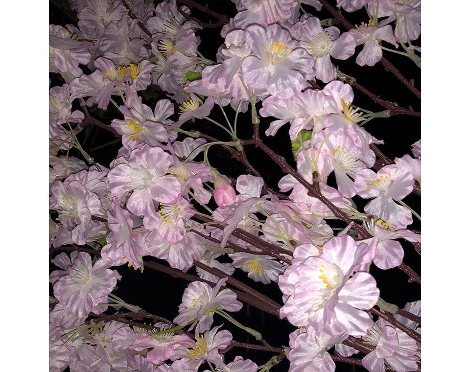 市ヶ谷の夜桜をiPhoneのカメラを使ってフラッシュで撮影する
