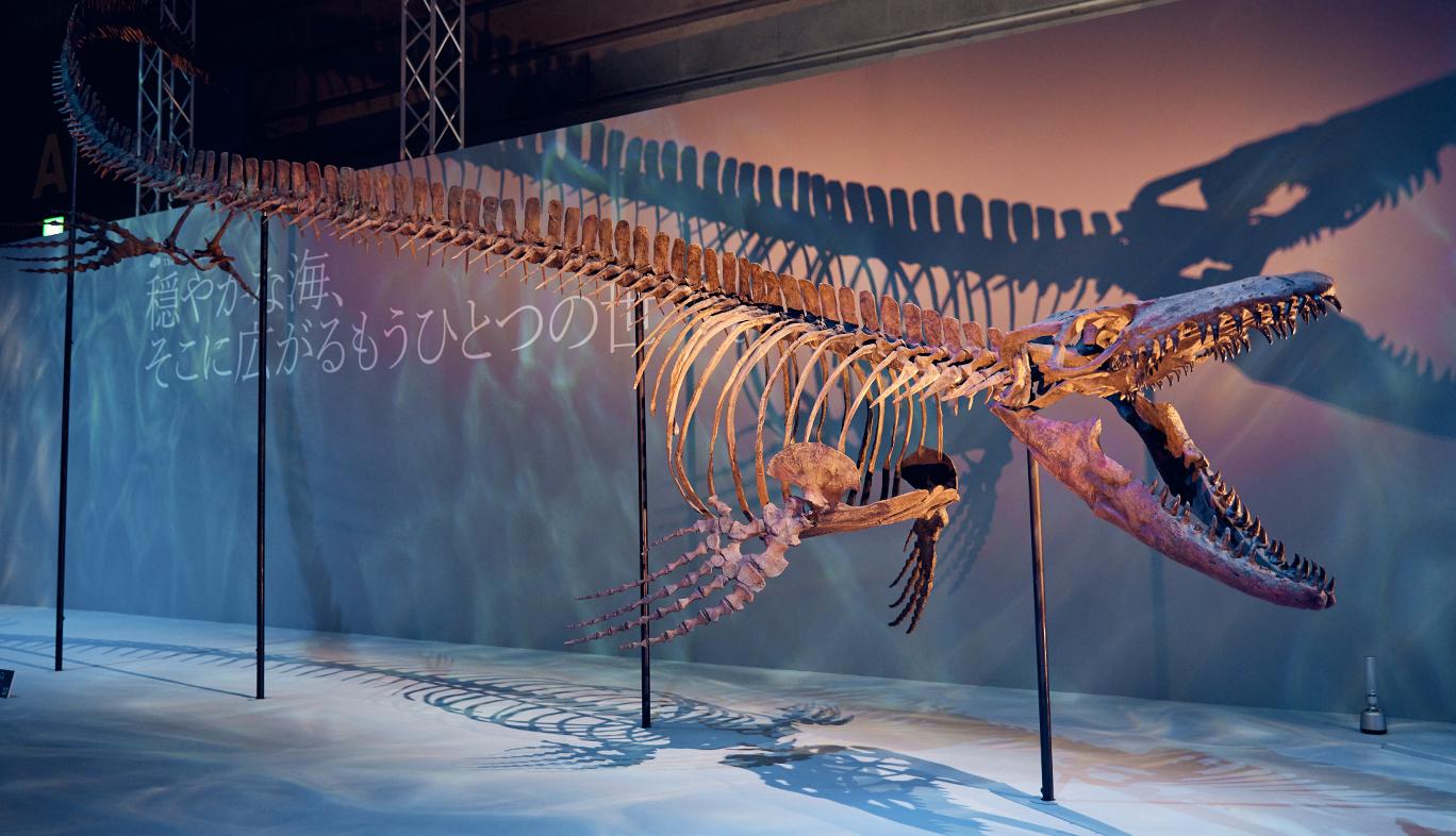 DinoScience 恐竜科学博のモササウルスの骨格標本