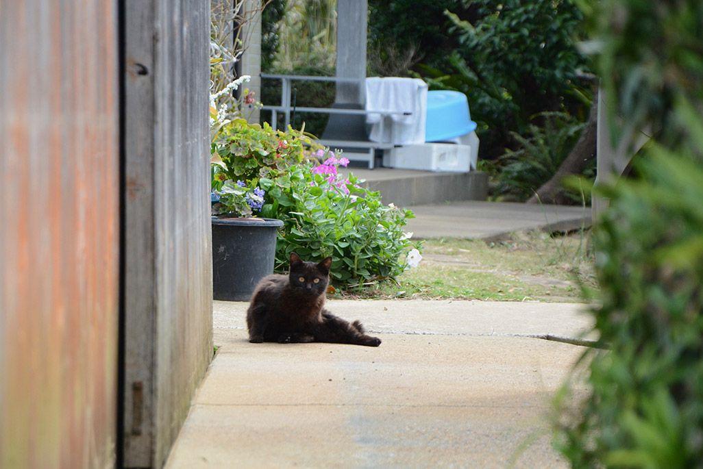 小値賀島のリラックスした猫