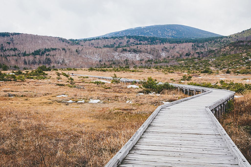 浄土平湿原の散策路