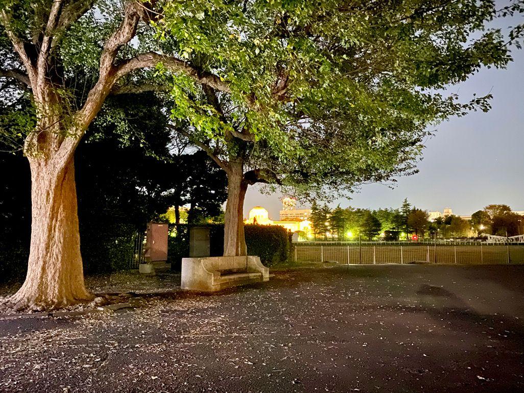 iPhone 11 Pro Maxのナイトモードで夜の公園を撮影