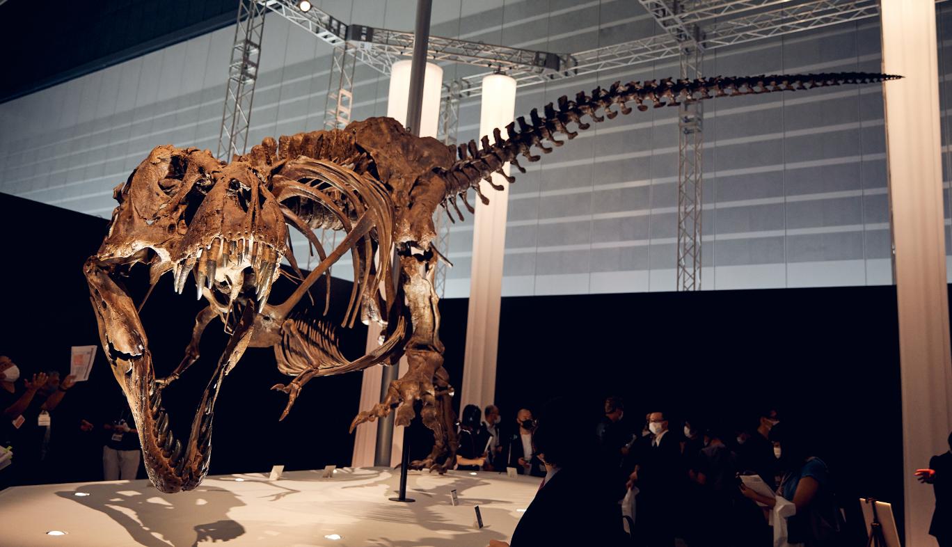 DinoScience 恐竜科学博の特別展示コーナーティラノサウルスの標本展示