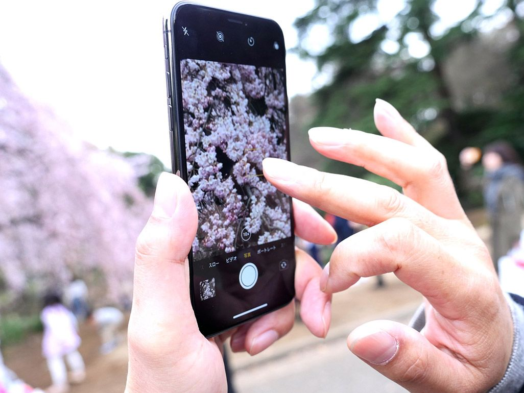 iPhone Xで桜を撮影