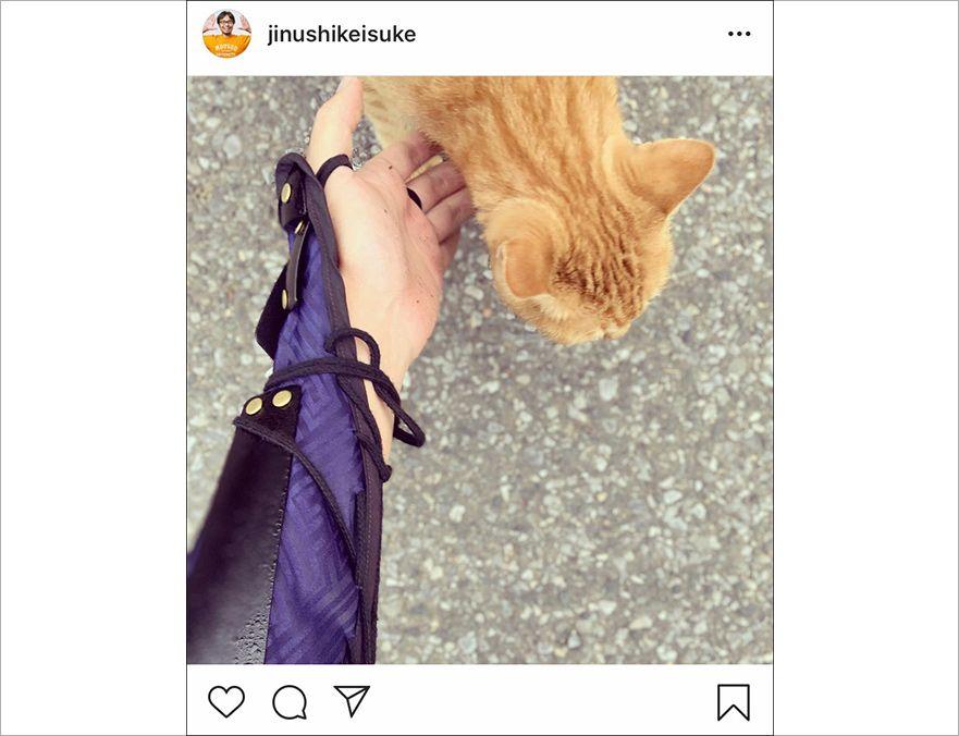 猫に触っている地主のインスタ写真のキャプチャ