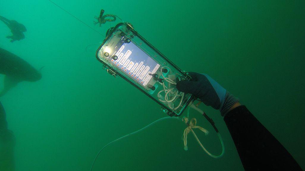 海中でLINEを受信したiPhone