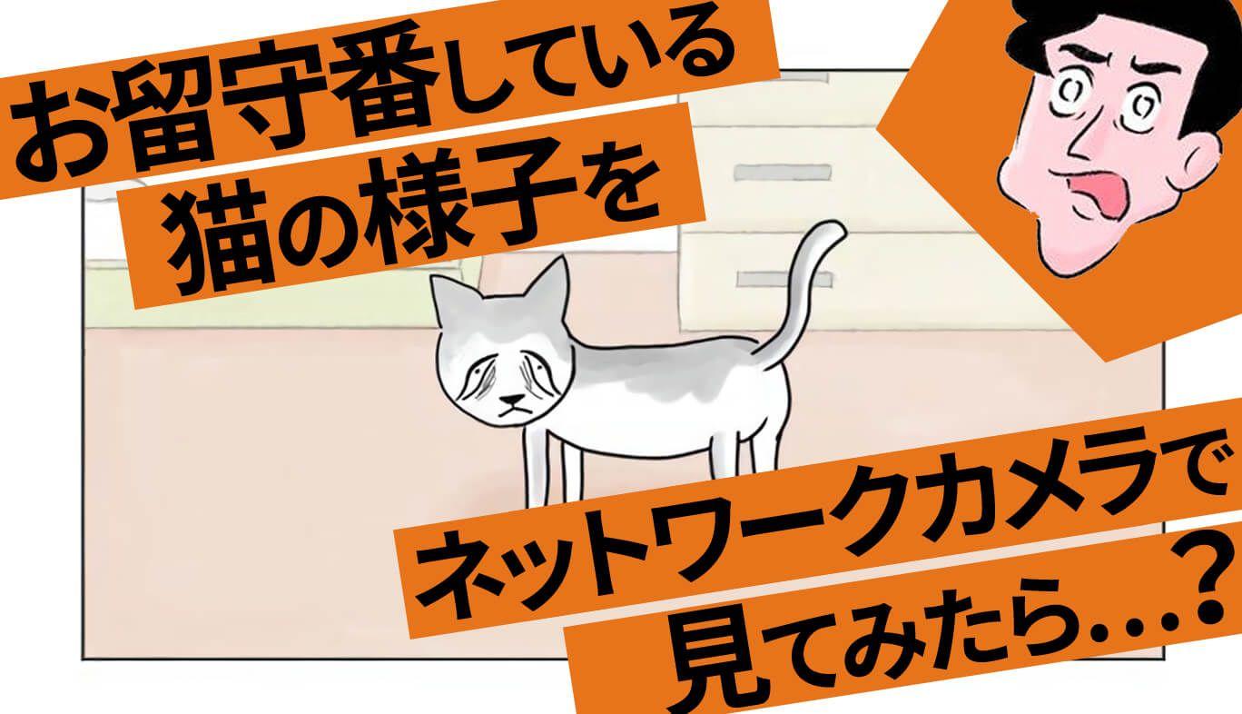 室木おすし お留守番している猫の様子をネットワークカメラで見てみたら…?