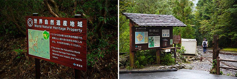 屋久島・縄文杉への道のり