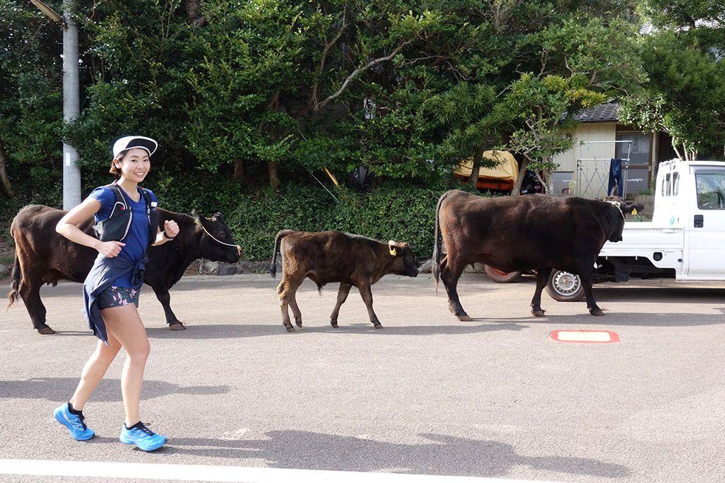 小値賀島の道路を歩く牛と走る浦谷美帆さん