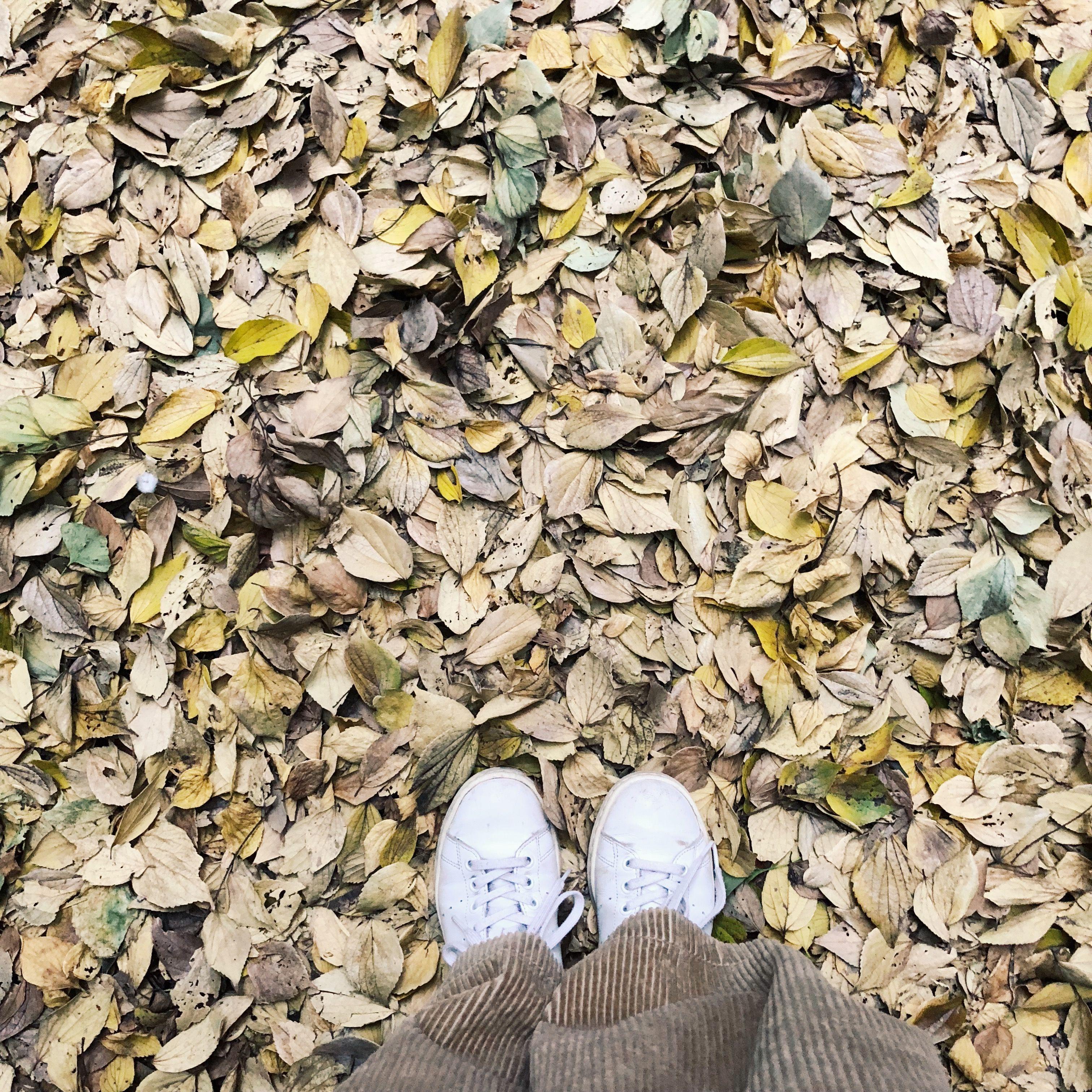 自身の足元と落ち葉