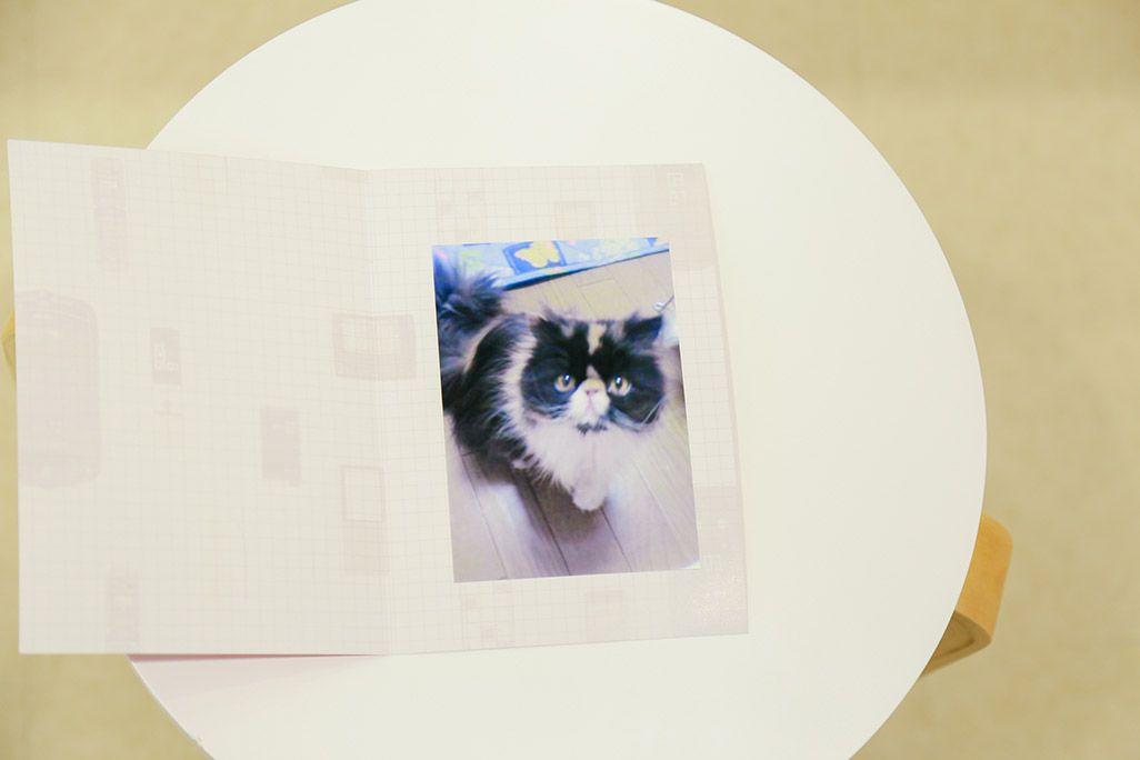 昔のケータイからプリントアウトされた猫の写真