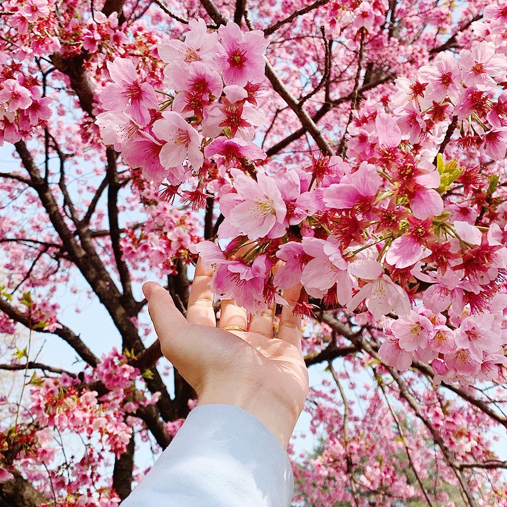 インスタ映えする桜