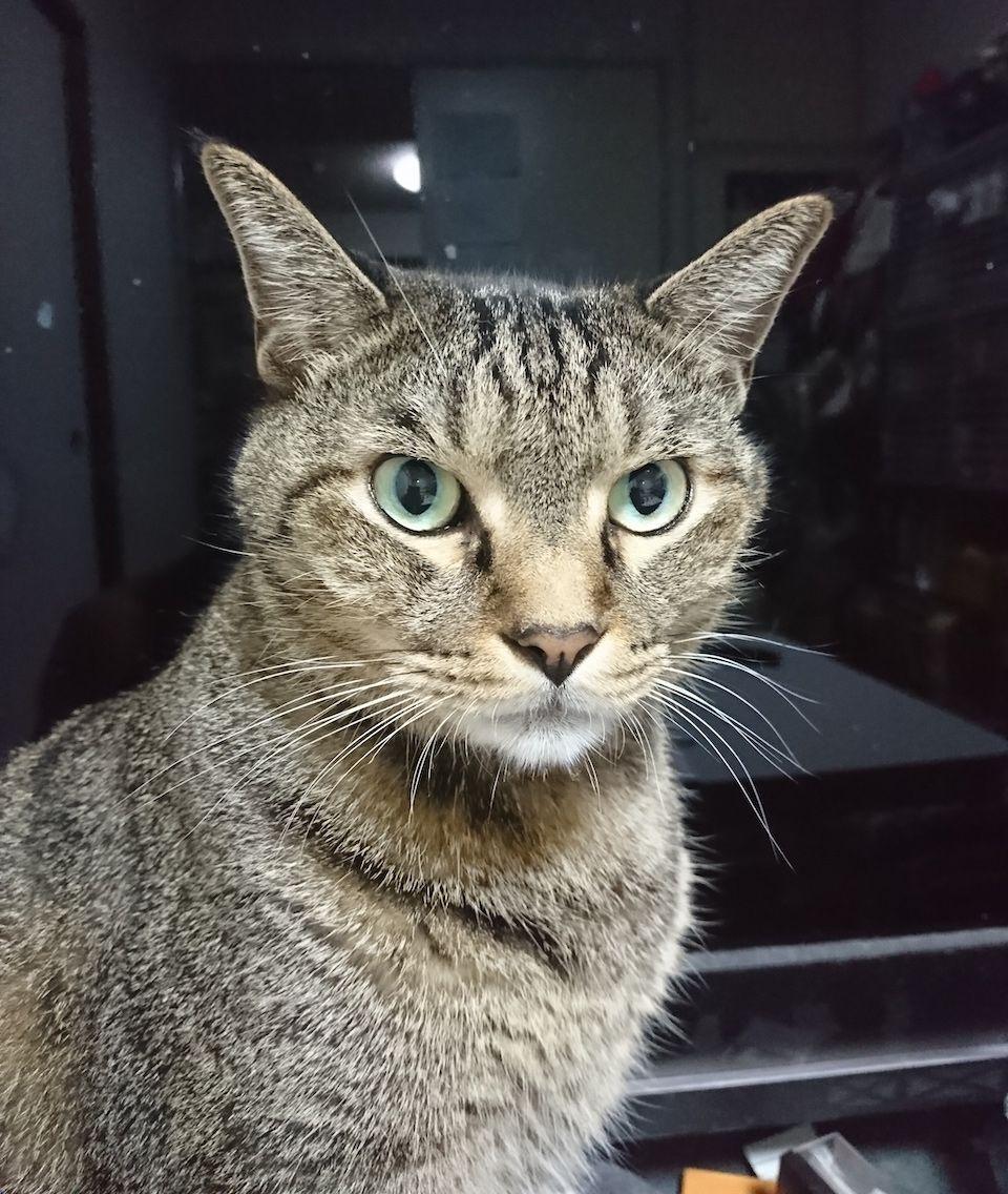 6歳のオス猫