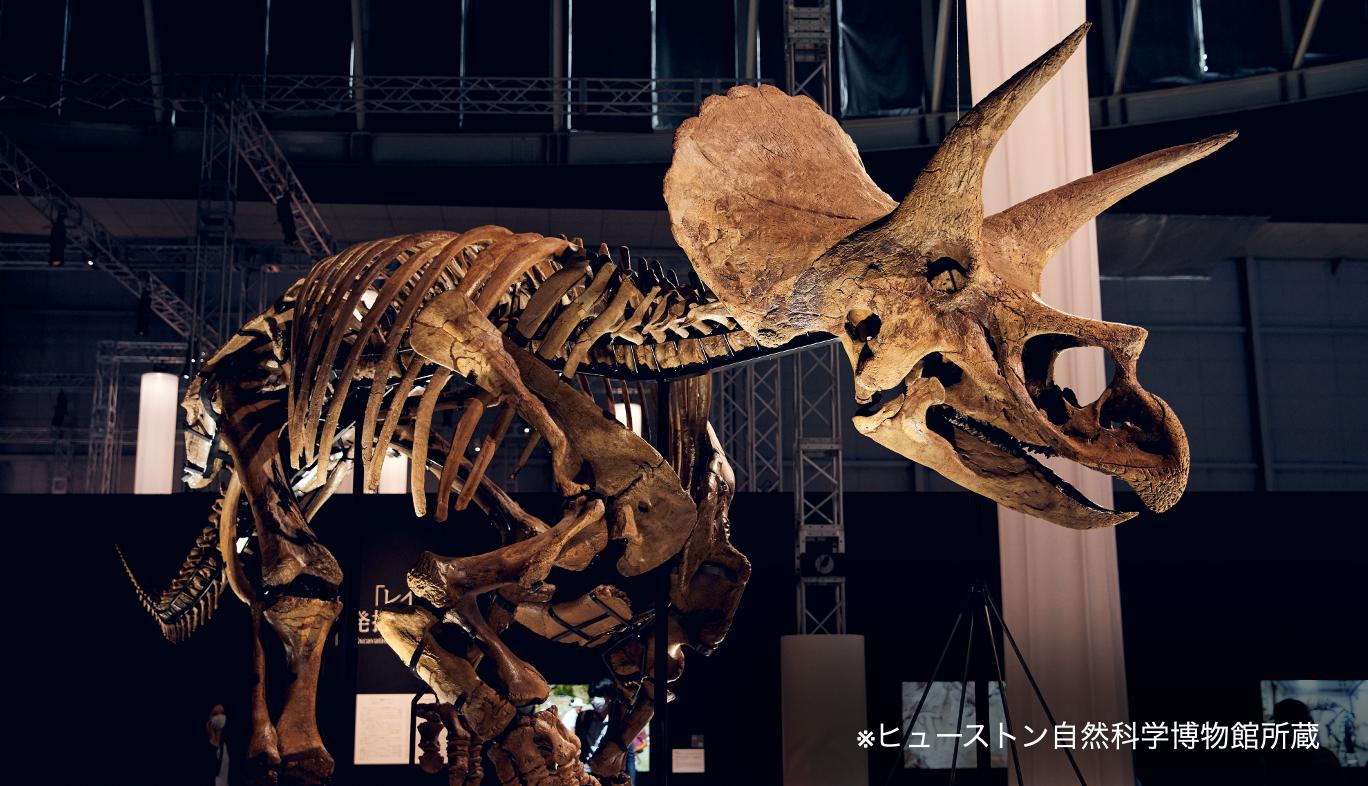 DinoScience 恐竜科学博の特別展示コーナートリケラトプスの実物化石