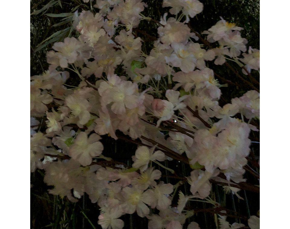 市ヶ谷の夜桜をiPhoneで撮影をする