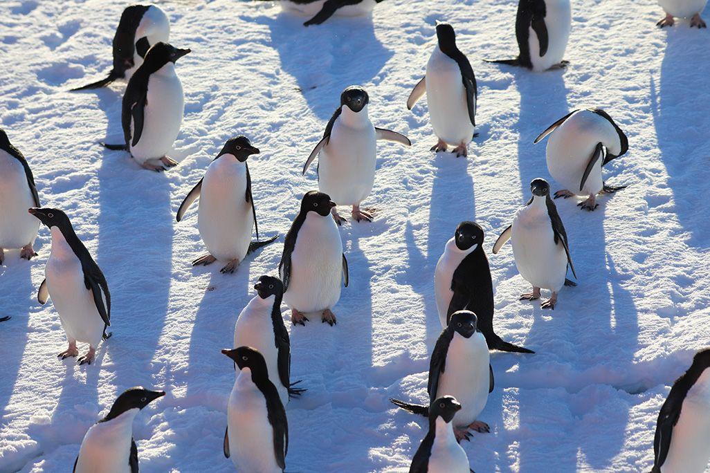 日なたにいるペンギンの群れ