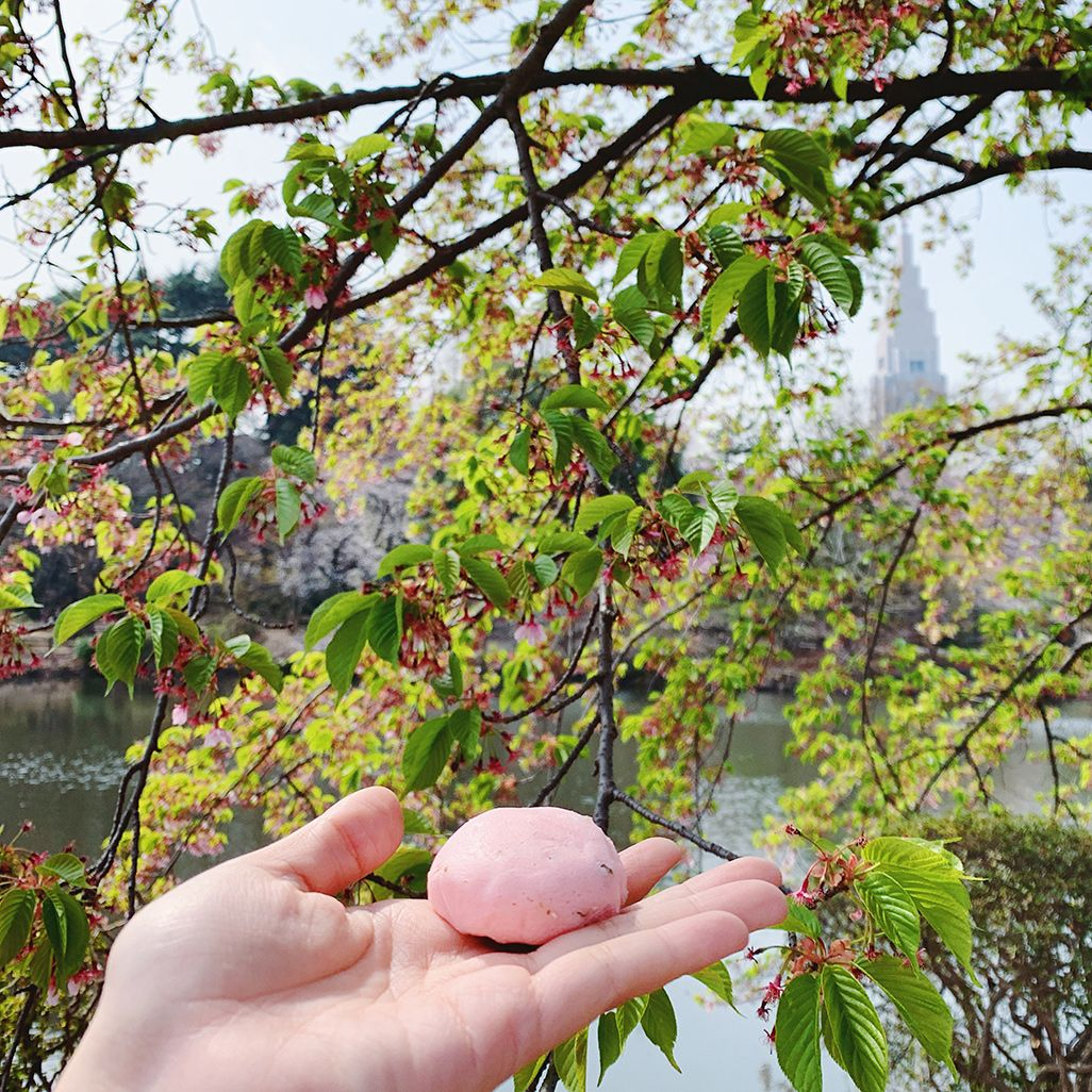 インスタ映えする山桜と桜まんじゅう