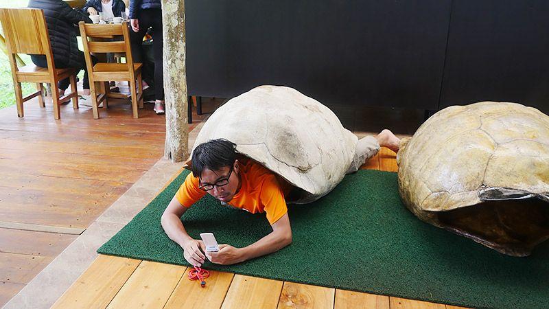 ガラパゴスゾウガメの甲羅を着る地主