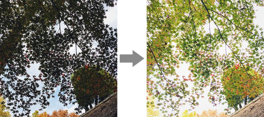 木を露出を調整して撮影