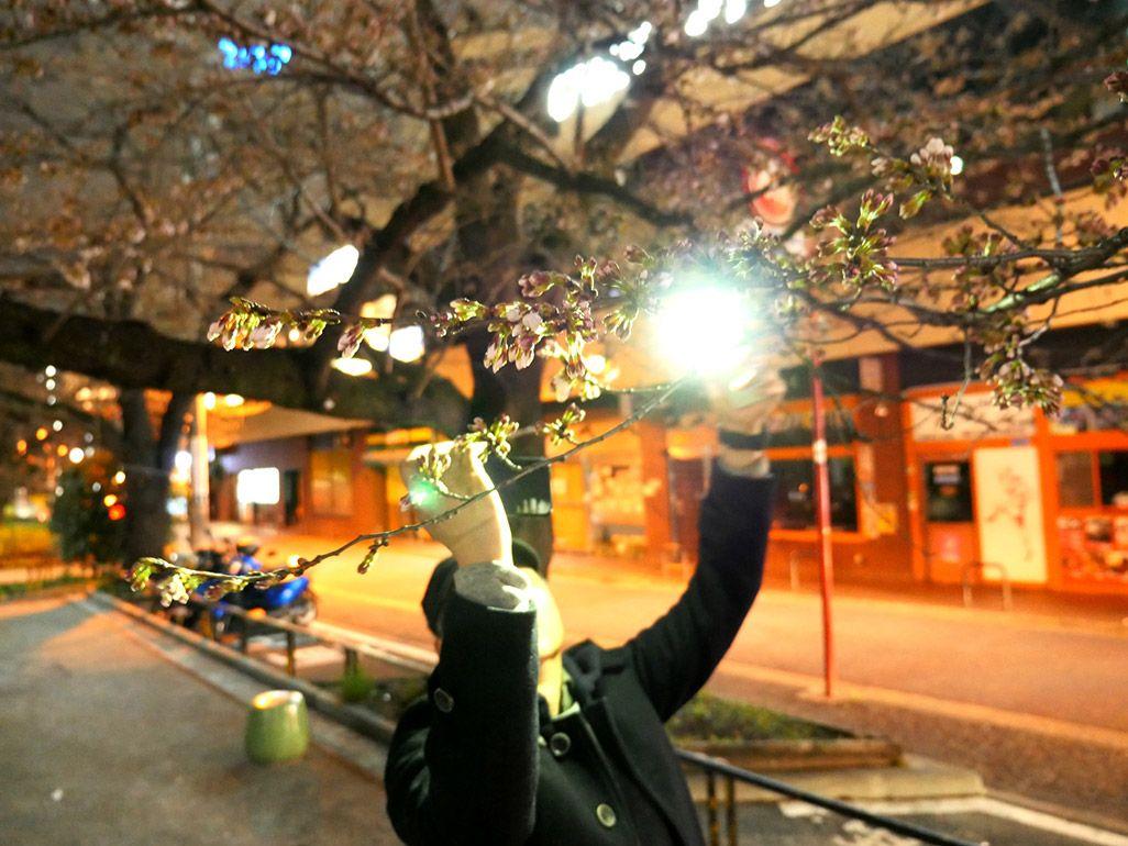 iPhoneを2台使って夜桜をライトアップして撮影をする方法