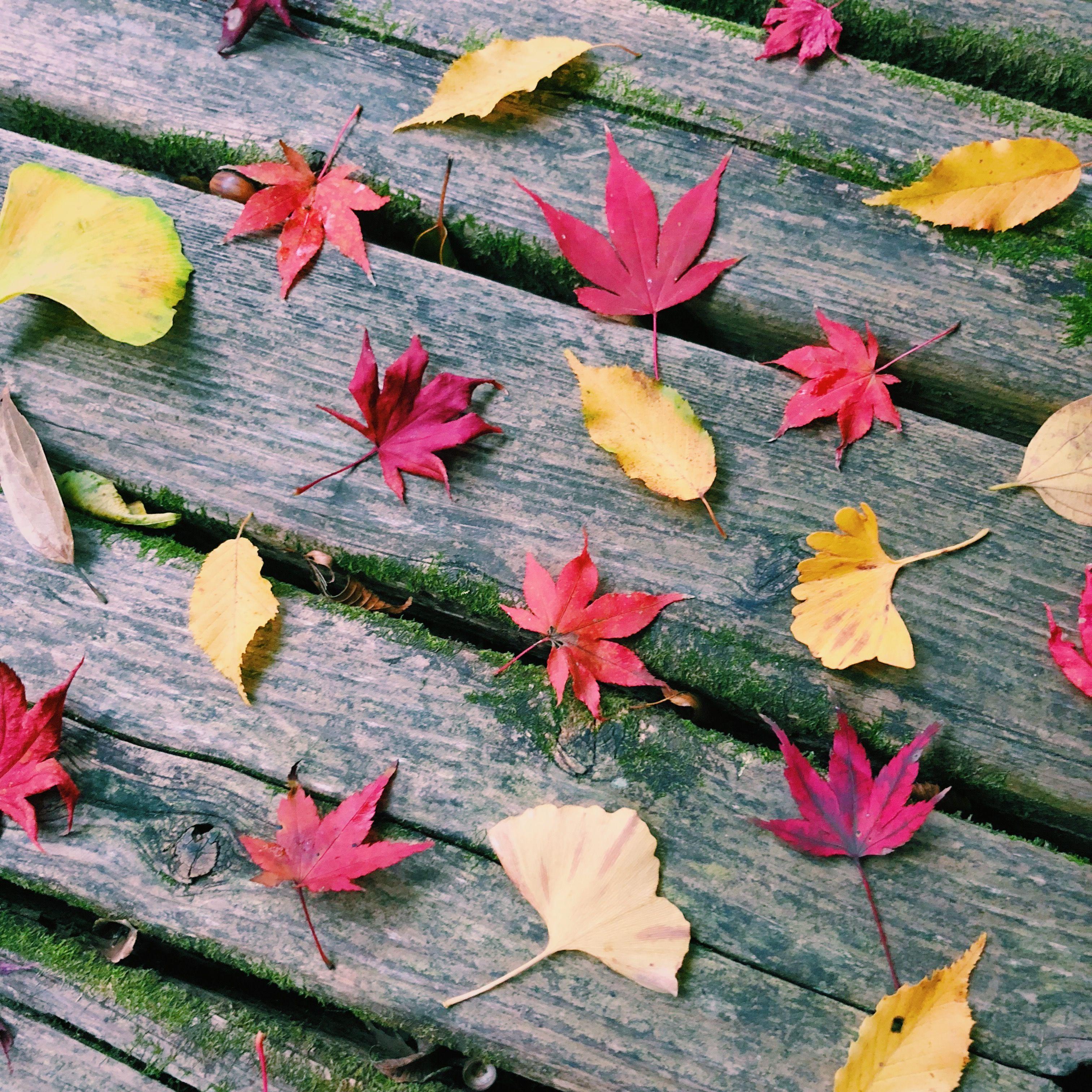 ベンチの上に並べられた紅葉
