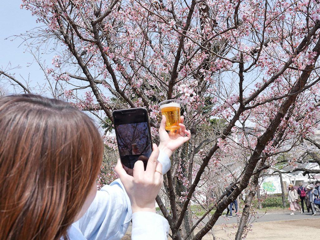 インスタ映えする桜とビール