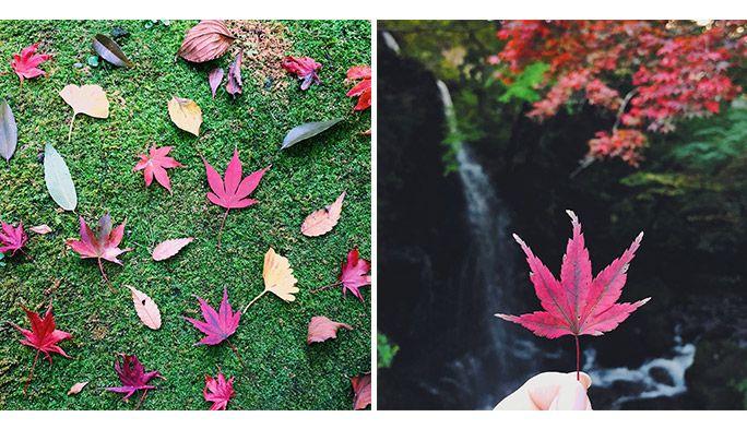 紅葉の写真をスマホでかわいく撮影するには? インスタ映えを叶える4つのテクニック