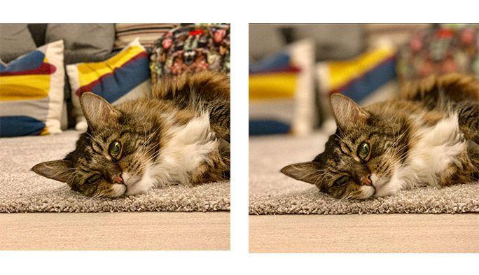 iPhone ポートレートモード 猫