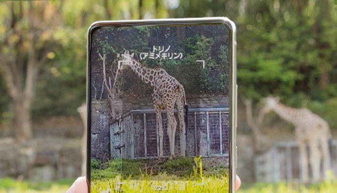 スマホで動物の性格や家族構成がわかる!動物園を最大限に楽しめるアプリ『one zoo』を東山動植物園で体験