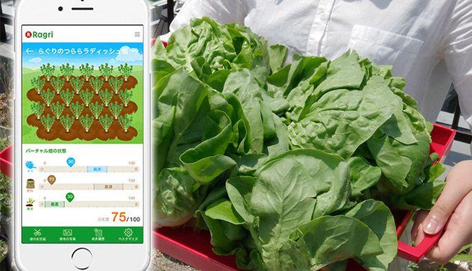 スマホで育てた野菜を食べてみた! リアルとバーチャルが融合した畑「Ragri」