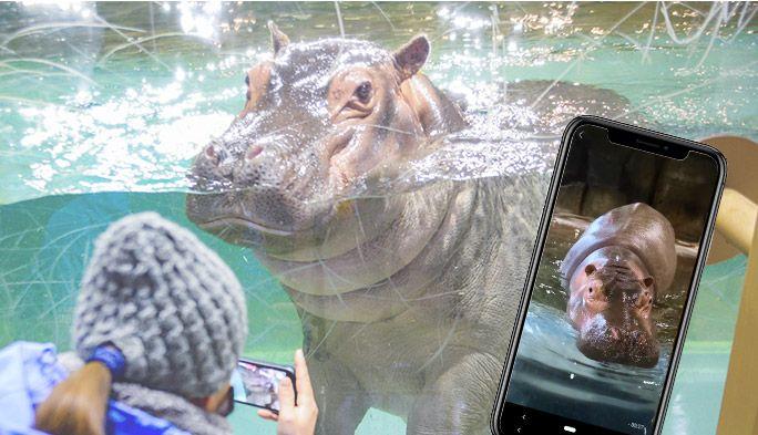 スマホで動物園に行ける「one zoo」 旭山動物園の飼育員さんに自宅での楽しみ方を聞いた