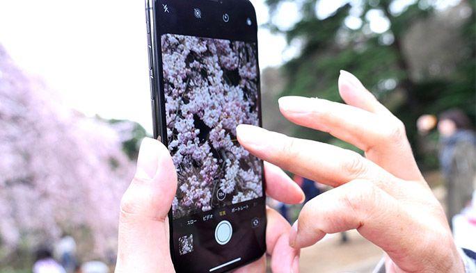 花見の季節にスマホでキレイに桜を撮る! プロの写真家が使う5つのテクとは?