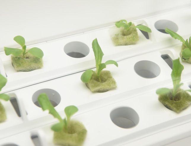 室内で水耕栽培ができるIoTキット「やさい物語」
